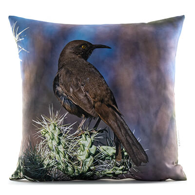 Curve-Billed Thrasher 14in Throw Pillow