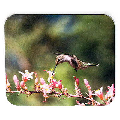 Pink Flower Hummingbird Mousepad