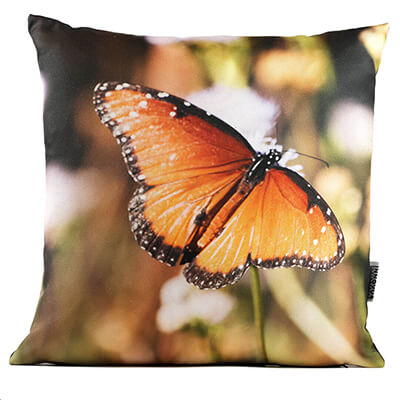 Queen Butterfly No 1 14in Throw Pillow