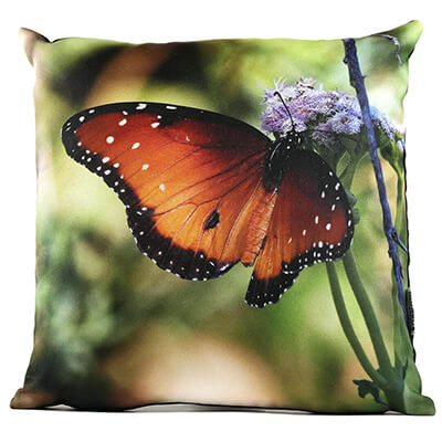 Queen Butterfly No 2 14in Throw Pillow