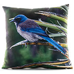 California Scrub Jay 14in Throw Pillow