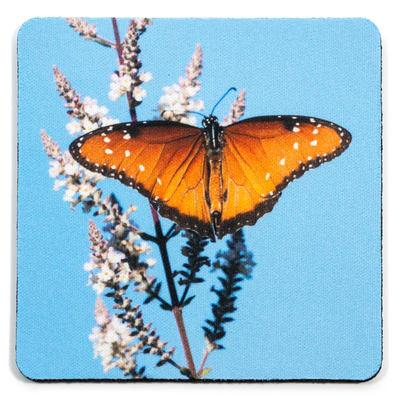 Queen Butterfly in Phoenix Botanical Garden Coaster